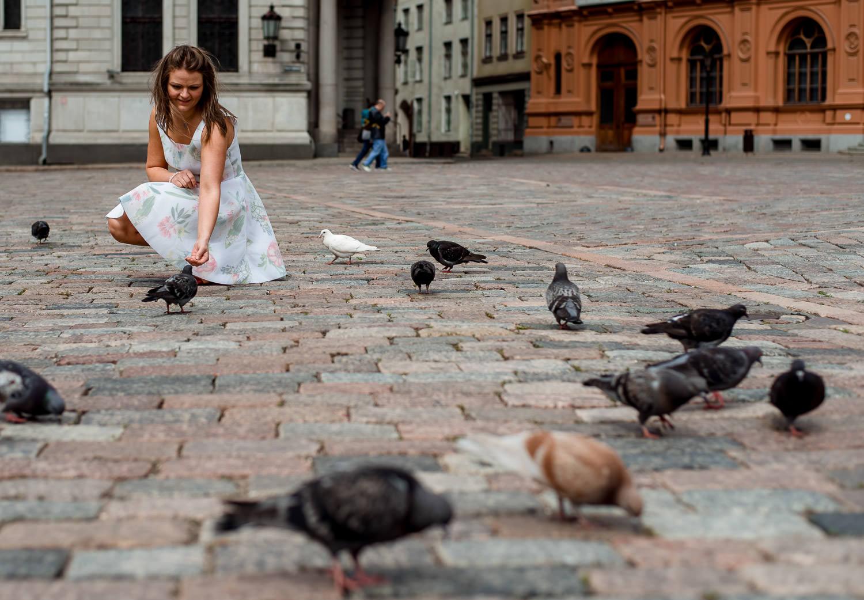 Pigeons in Riga
